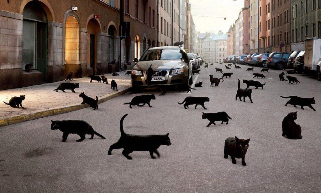черная кошка перешла дорогу