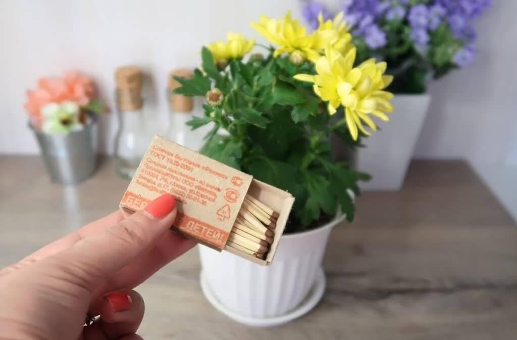 как поливать цветы марганцовкой от мошек