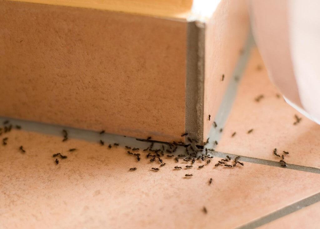 Наиболее эффективные методы избавления от красных муравьев
